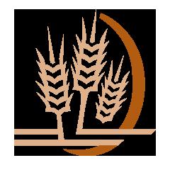 Wheat_small